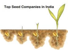 Top seed companies in India
